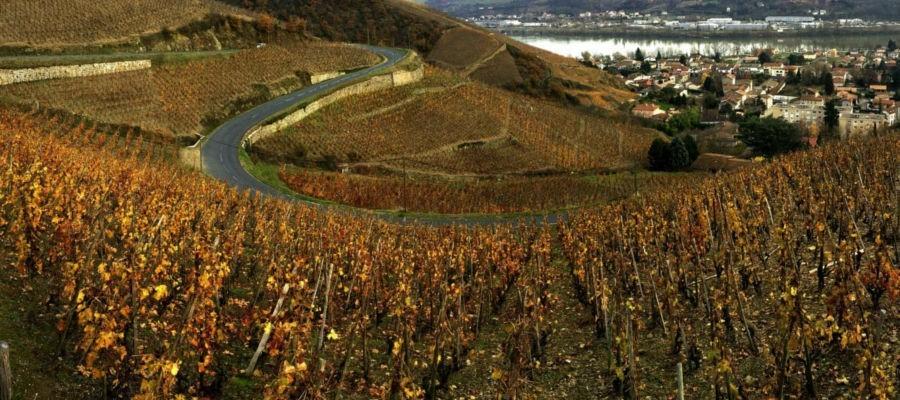 Les vins du domaine Laurent Marthouret